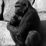 256px-Deep_in_thought